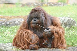 Zoo Berlin Eintrittspreise öffnungszeiten Vom Berliner Zoo